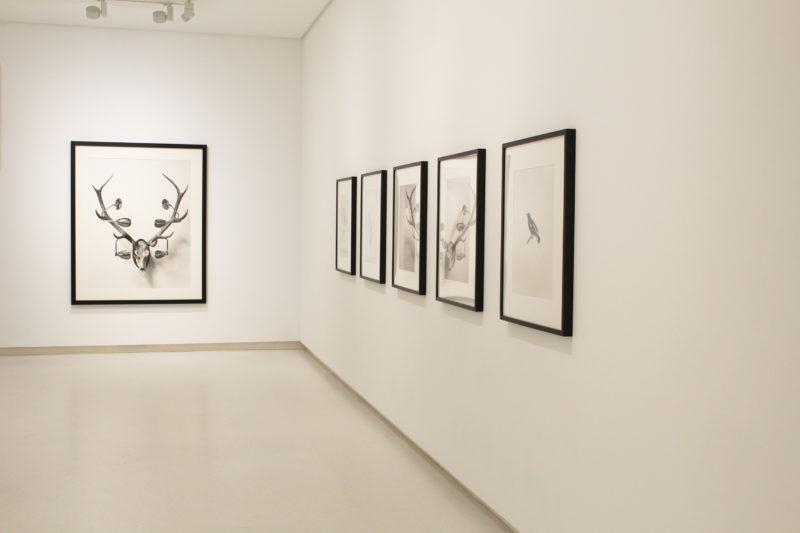 Chema Madoz exposición en Galería Elvira González, 2018
