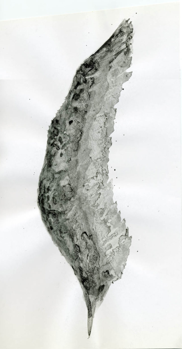 Adolfo Schlosser, Sin título, 2000. 33 x 18 cm Tinta china sobre papel.